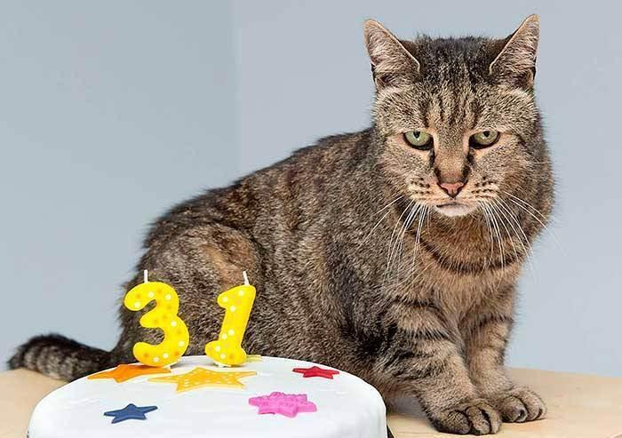 Кот дрожит как будто ему холодно причины. кот дрожит — полный список причин от ветеринара