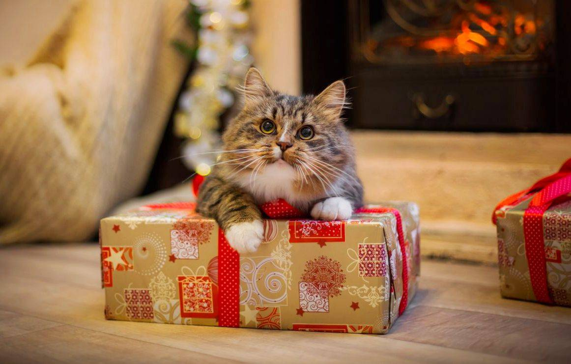 Почему не стоит дарить домашних питомцев в новогодние праздники