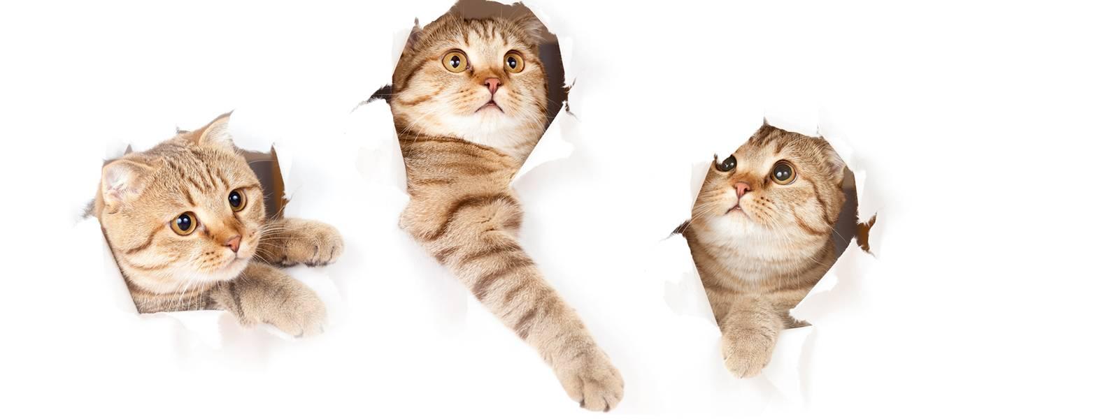 Как отучить кошку драть мебель и обои: 3 верных способа