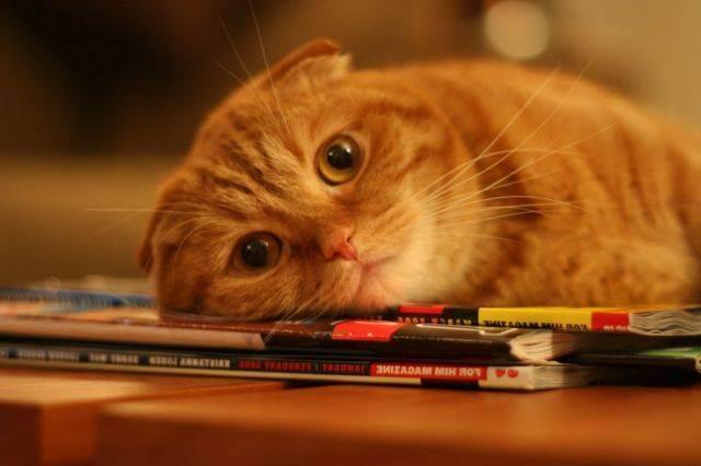 Панкреатит у кошек причины симптомы и лечение
