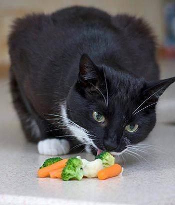 Кошка ест цветы что делать, как отучить кошку есть цветы
