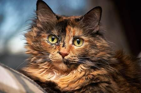 Правила подготовки к родам, и что делать, если кошка рожает
