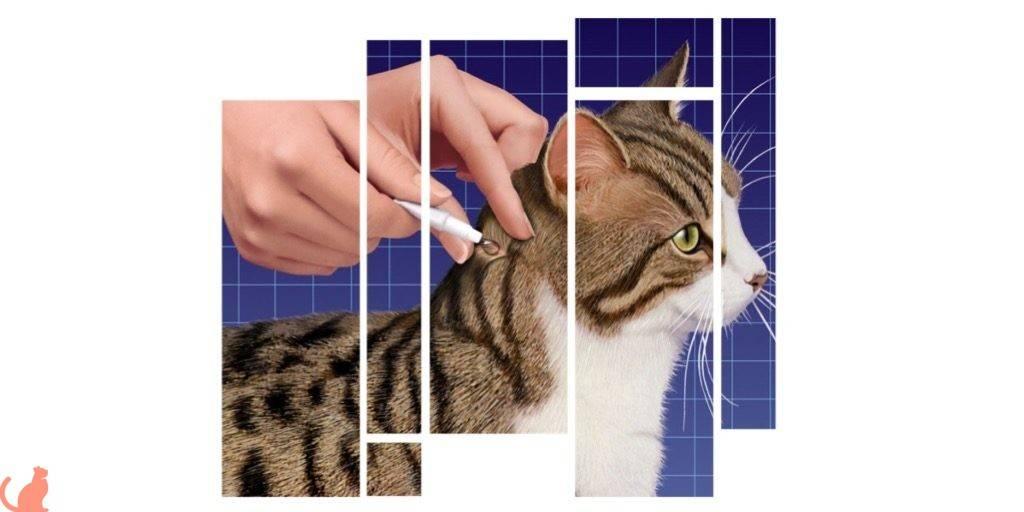 Капли от блох: виды, принцип действия и способ применения : инструкция по применению | компетентно о здоровье на ilive