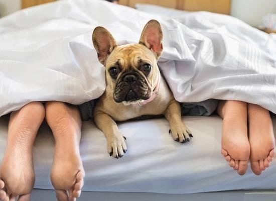 Заводить ли щенка до рождения ребенка? - запись пользователя malina (id2166847) в сообществе домашние животные в категории дети и животные - babyblog.ru