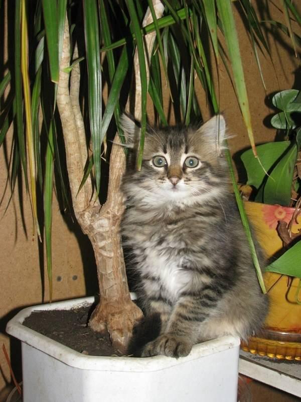 Как отучить кошку гадить в горшки с цветами?