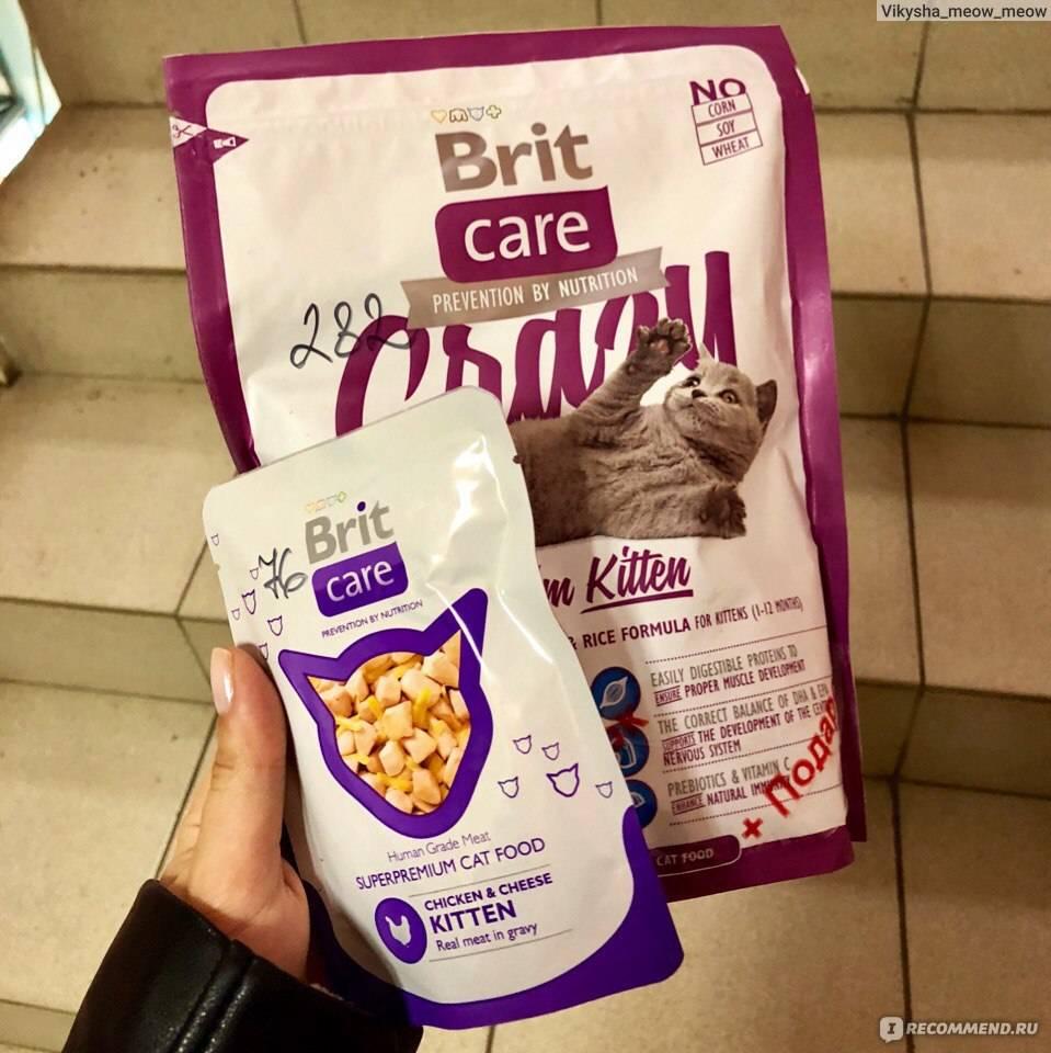 Рейтинг кормов для кошек: по классам, как выбрать