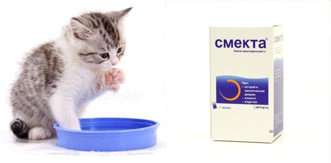«смекта» для кошек: дозировка, можно ли и как правильно давать, как развести