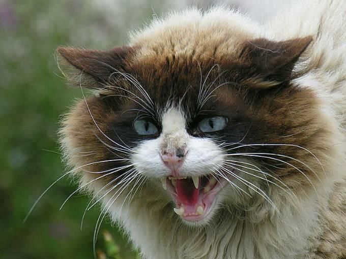 Болезни кошек, передающиеся человеку | нвп «астрафарм»