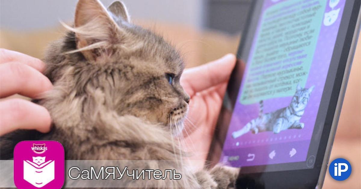 Что значат «мур» и «мяу», или как научится понимать язык кошек