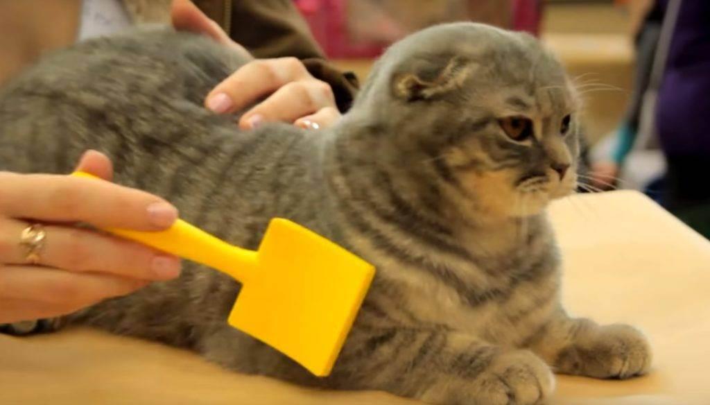 Подготовка кошки к стерилизации