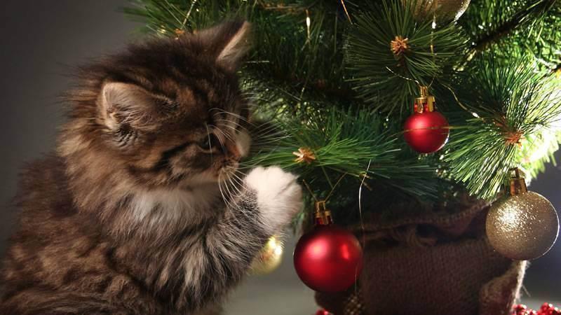 Что делать, если кот съел дождик или мишуру с елки?