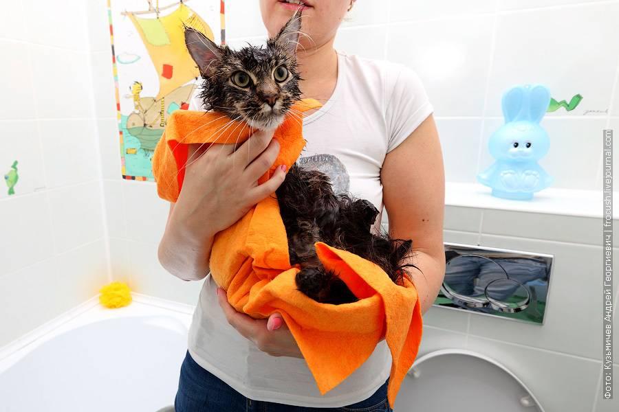 Как правильно мыть кота?
