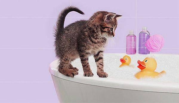 Как помыть маленького котёнка первый раз: когда начинать, как правильно купать