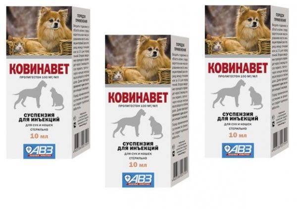 """""""ковинан"""" для кошек: инструкция и отзывы"""