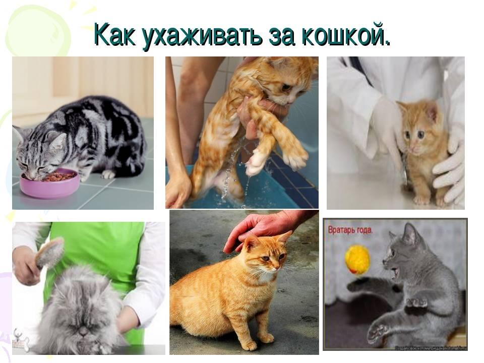 Уход за кошкой - как правильно ухаживать за кошкой