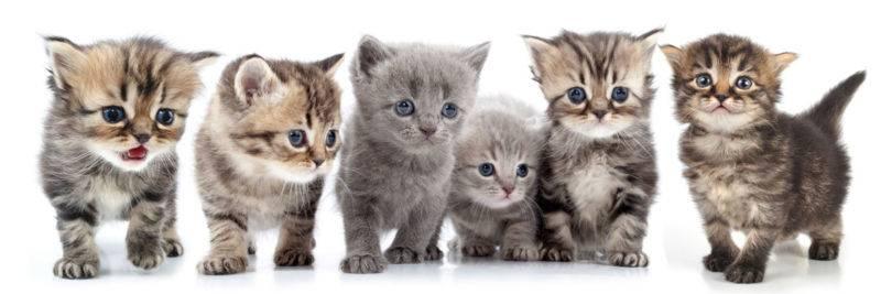 Как определить пол котенка – советы и рекомендации