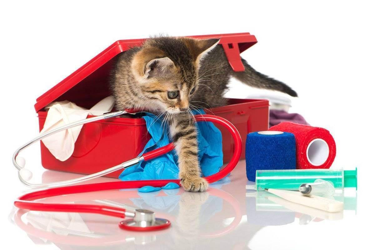 Домашняя ветеринарная аптечка