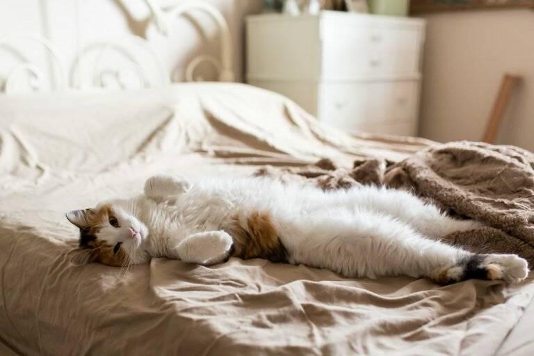 Почему кошки много спят