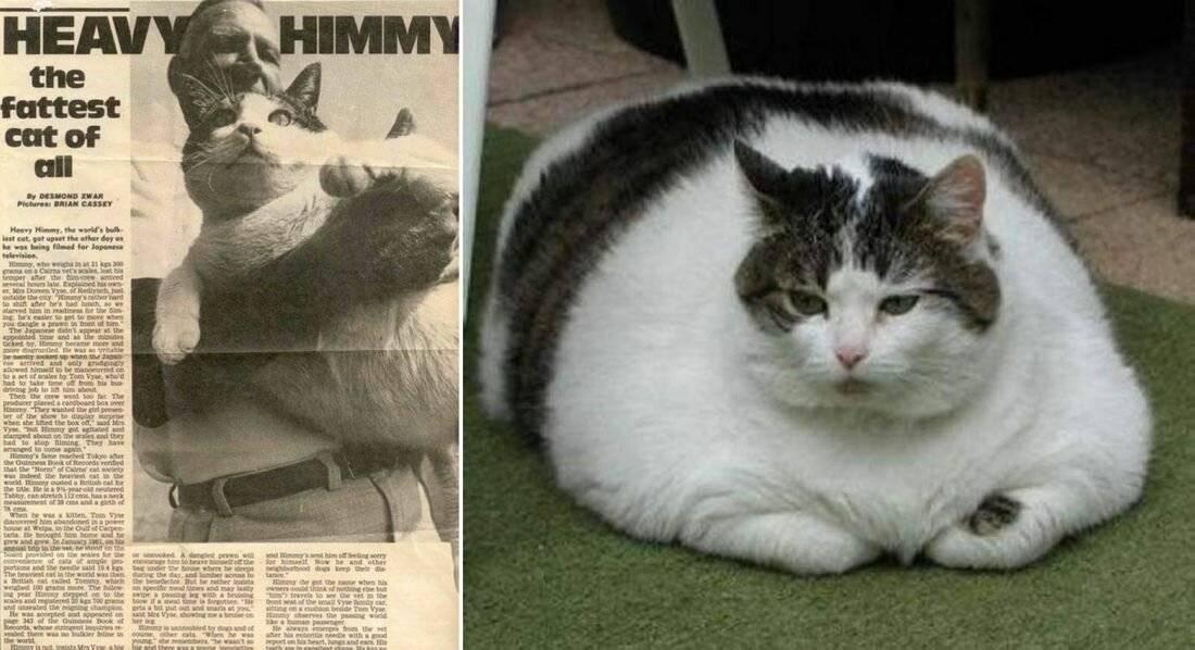 Кошачьи рекорды гиннеса
