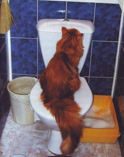 Как отучить кота метить территорию в квартире: что делать, основные причины, выбор средств
