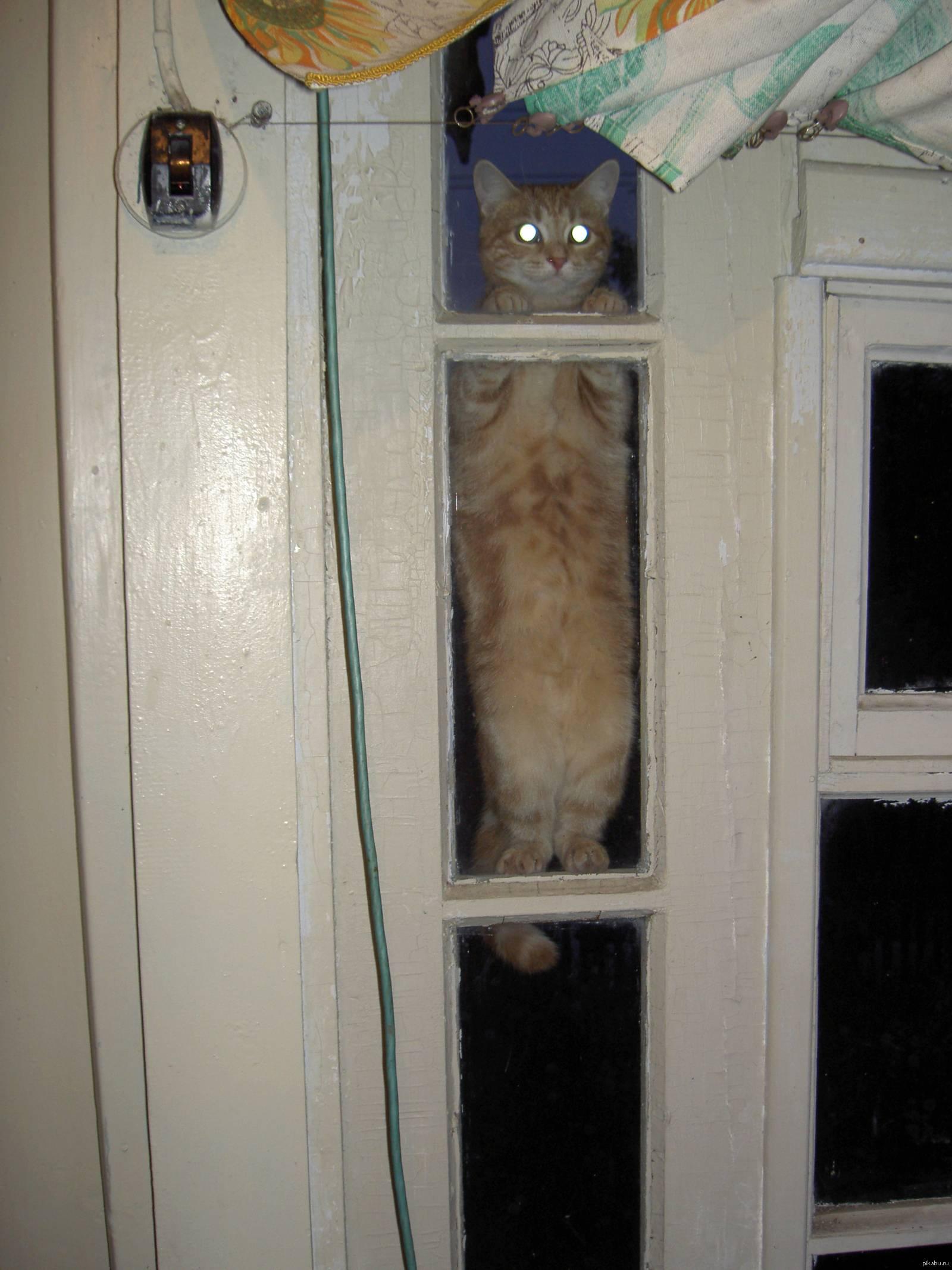 Топ 6 причин, почему кошка прячется в темные места