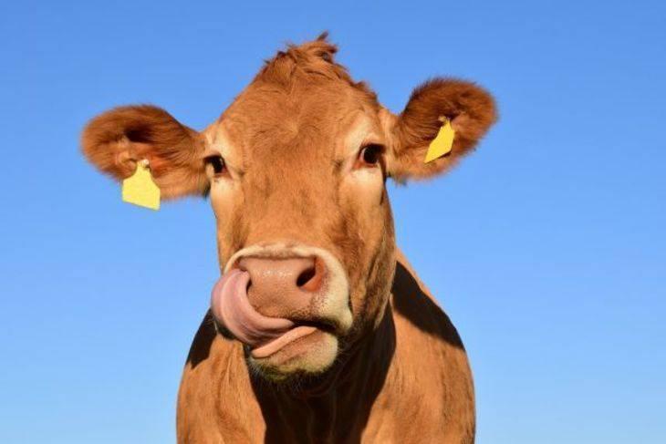 Гомеопатия в оказании первой помощи животным.
