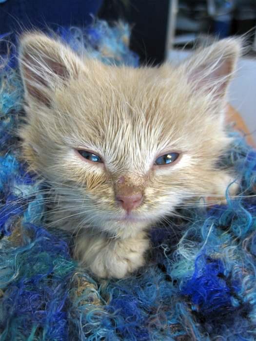 Выбор котенка и питомника. из личного опыта. - запись пользователя mama sveta (kharlamovasi) в сообществе домашние животные в категории хотим завести зверушку - babyblog.ru