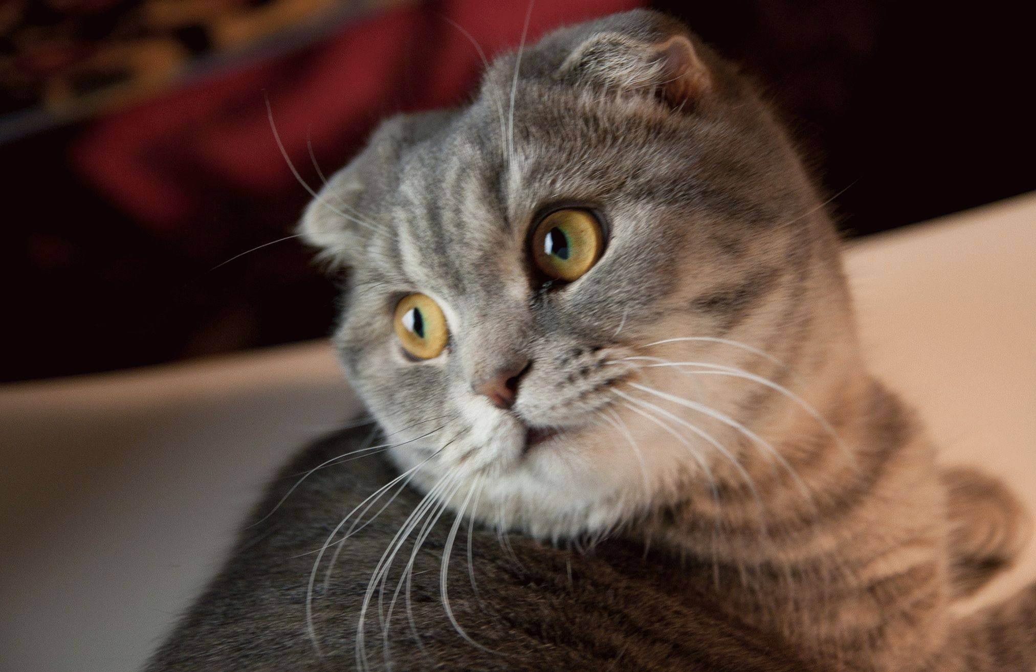 Как дрессировать кота? советы эксперта