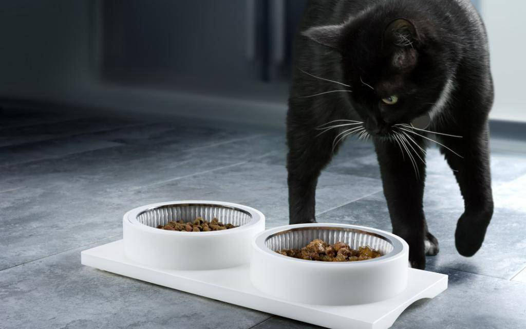 Почему кошки закапывают еду: 8 распространенных причин и методы отучения от привычки