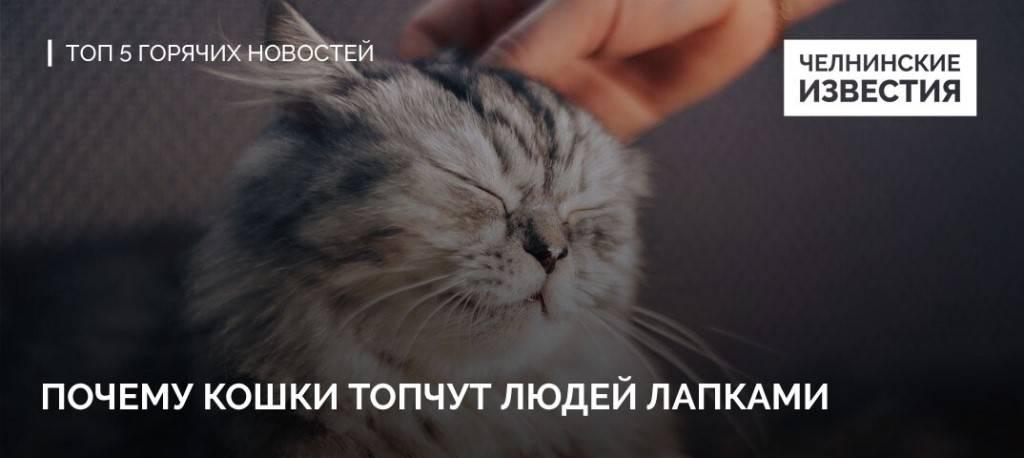 Почему кошки мнут лапами человека?