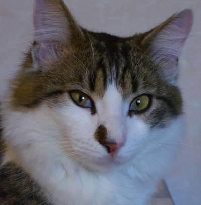 Причины появления белой пленки на глазах у кошки