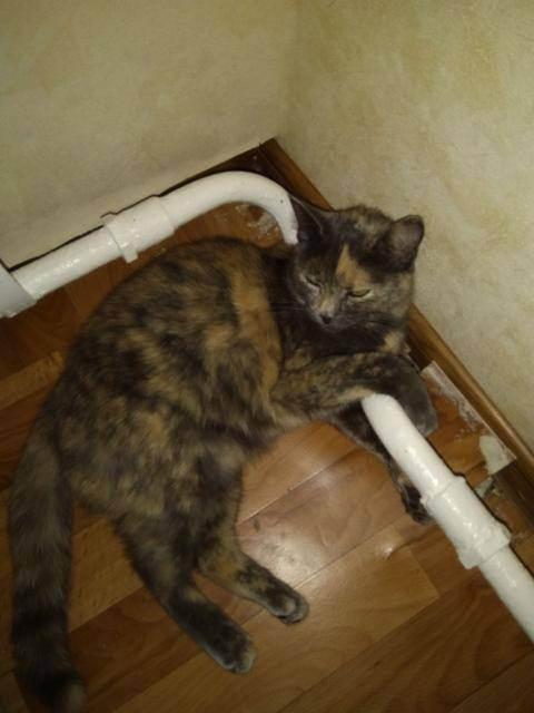 Пропала кошка что делать