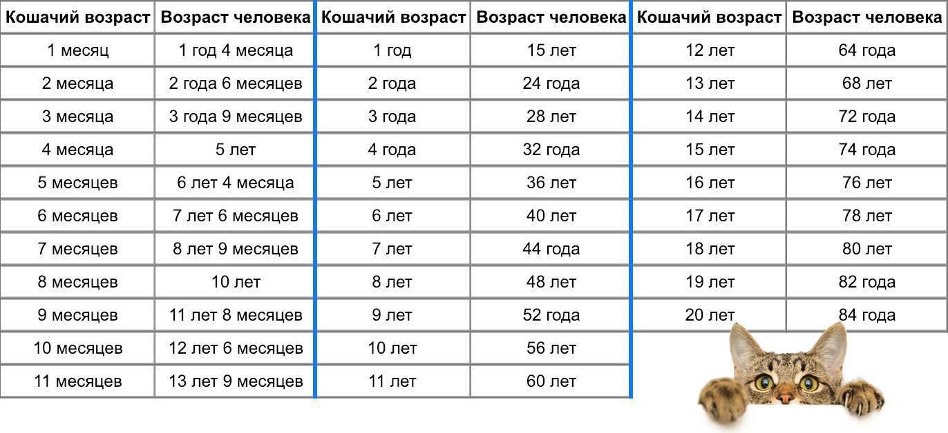 До какого возраста растут коты - oozoo.ru