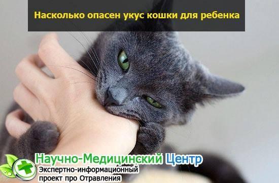 Антибиотики при укусе кота