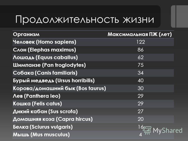 Русско-европейская лайка – все о породе: внешность, характер, уход и содержание