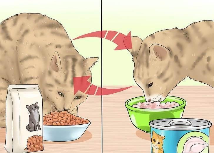 Можно ли кормить одновременно сухим и влажным кормом кота?