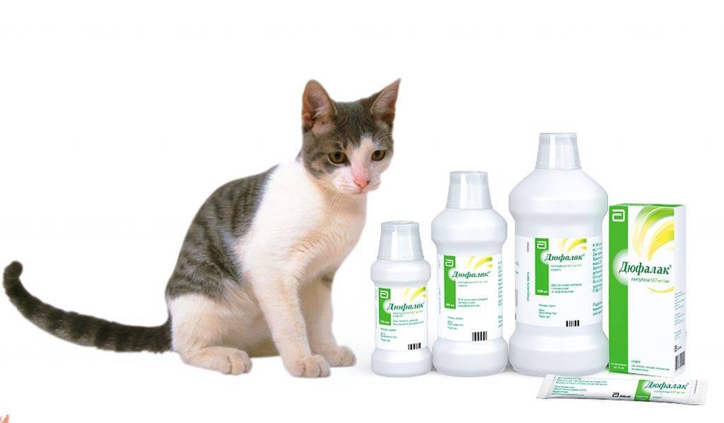 Запор у кошки: что делать, причины и лечение, что дать срочно от запора   zoosecrets