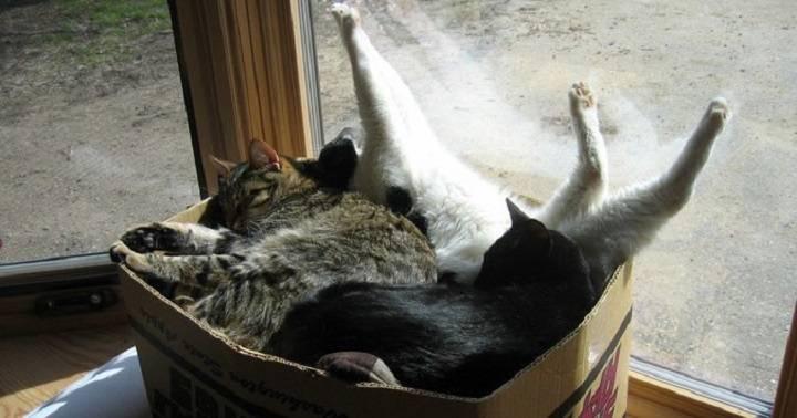 Кот в коробке — ещё одна кошачья загадка