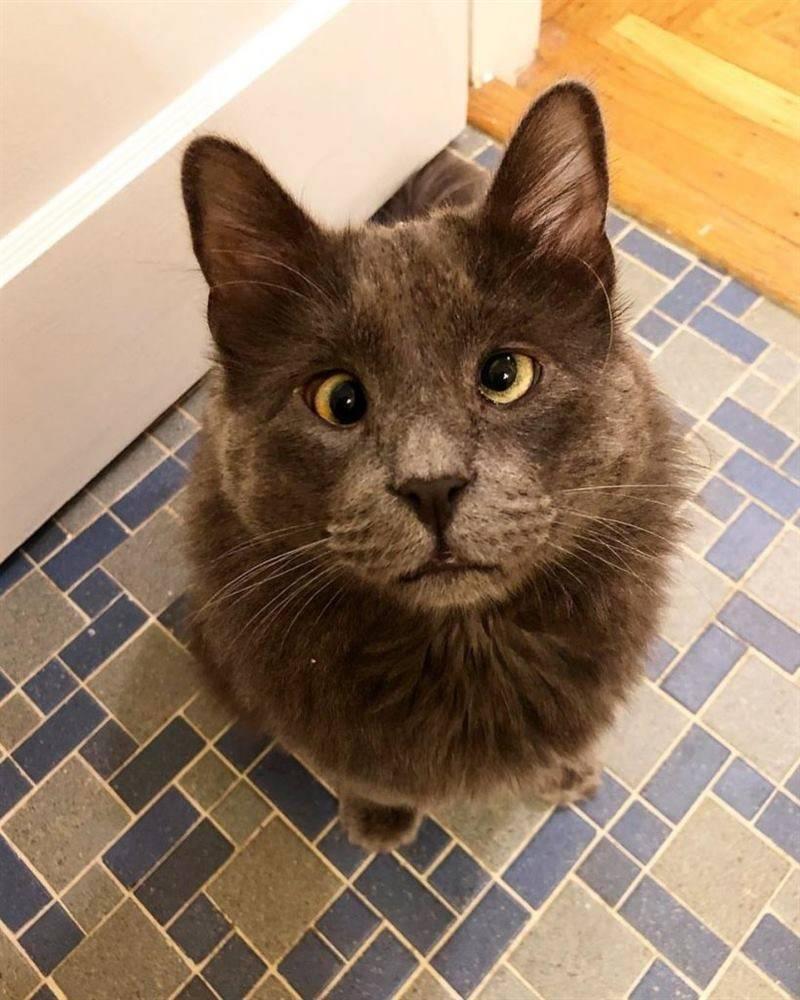 Глаза котенка: когда открываются