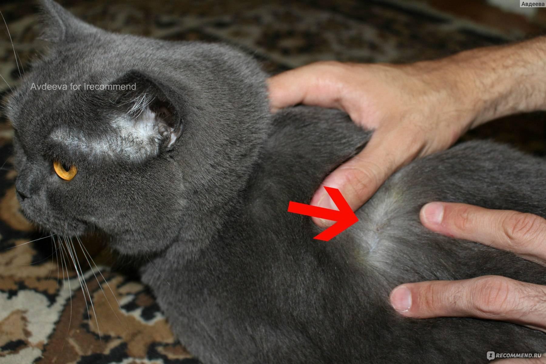 Чипирование кошек: необходимость или каприз?
