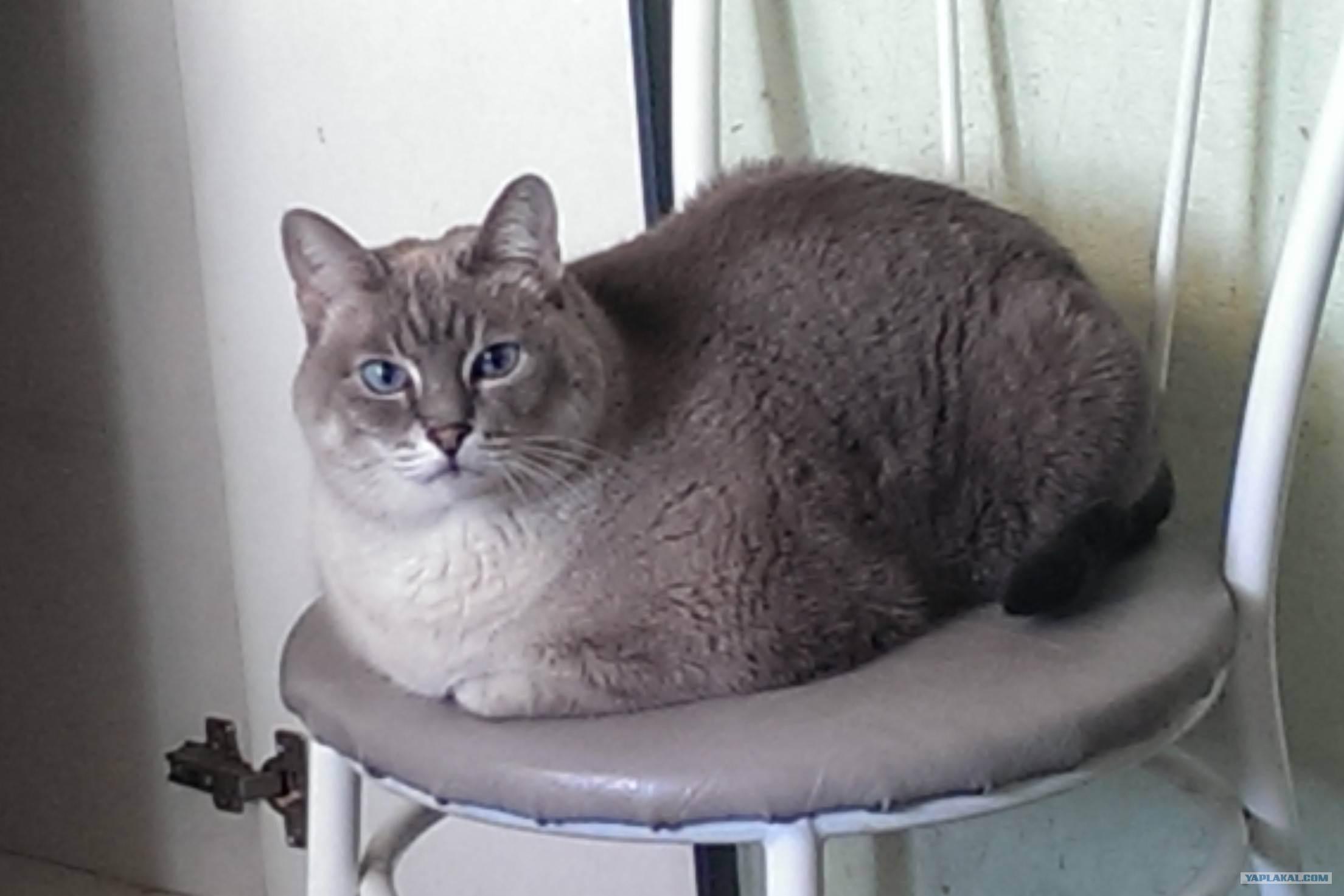 Кастрация котов: за и против