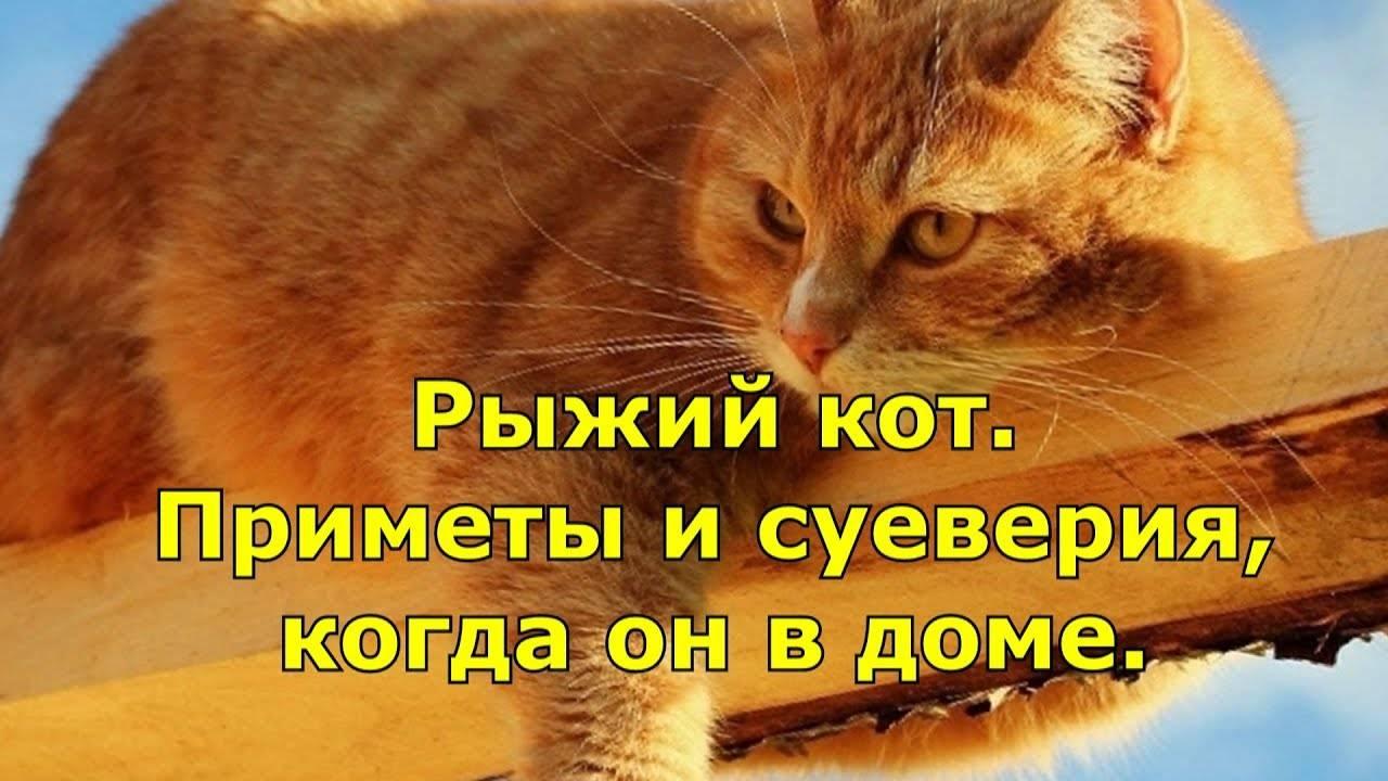 Приметы про кошек в доме: трехцветная, рыжая, черная и белая