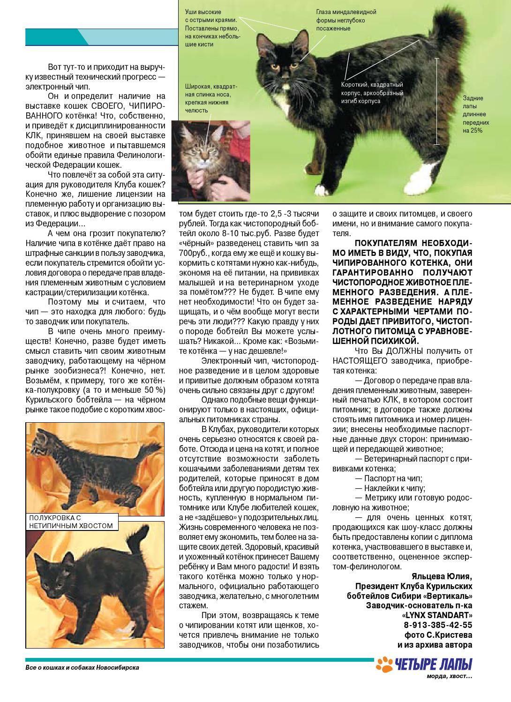 Что нужно знать, чтобы стать заводчиком кошек?
