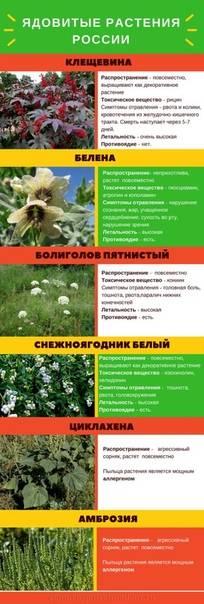 Ядовитые растения для кошек