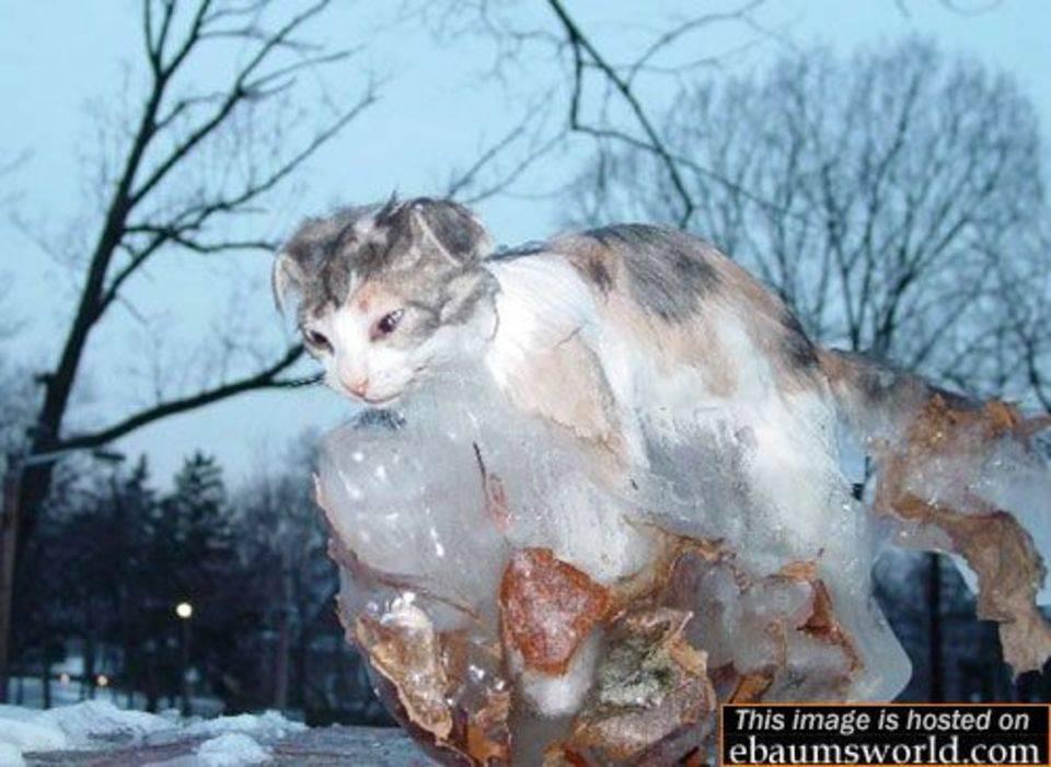 Мерзнут ли собаки зимой на улице: мнение ветеринаров