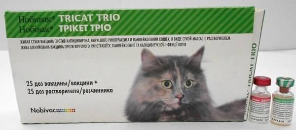 Панлейкопения у котят: какие вакцины можно применять для профилактики чумки