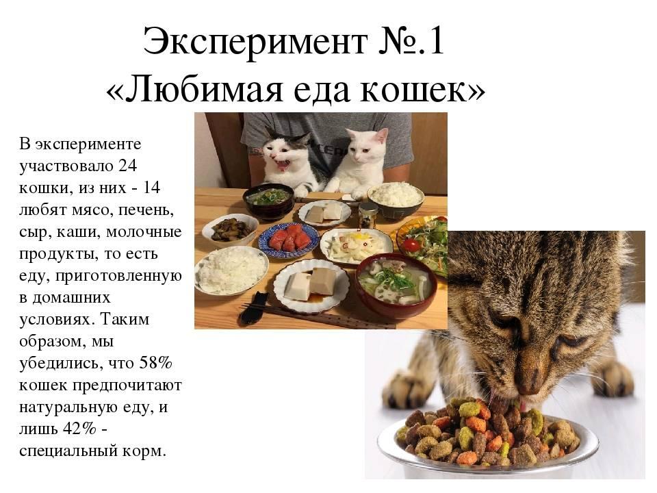 Чем кормить котенка британца? подбираем продукты для кормления и составляем полноценный рацион для котенка британской породы - автор екатерина данилова - журнал женское мнение