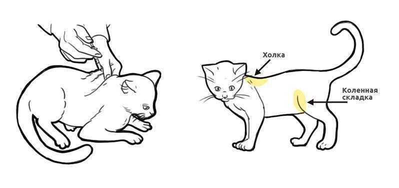 Укол коту в мышцу бедра — рассмотрим по полочкам