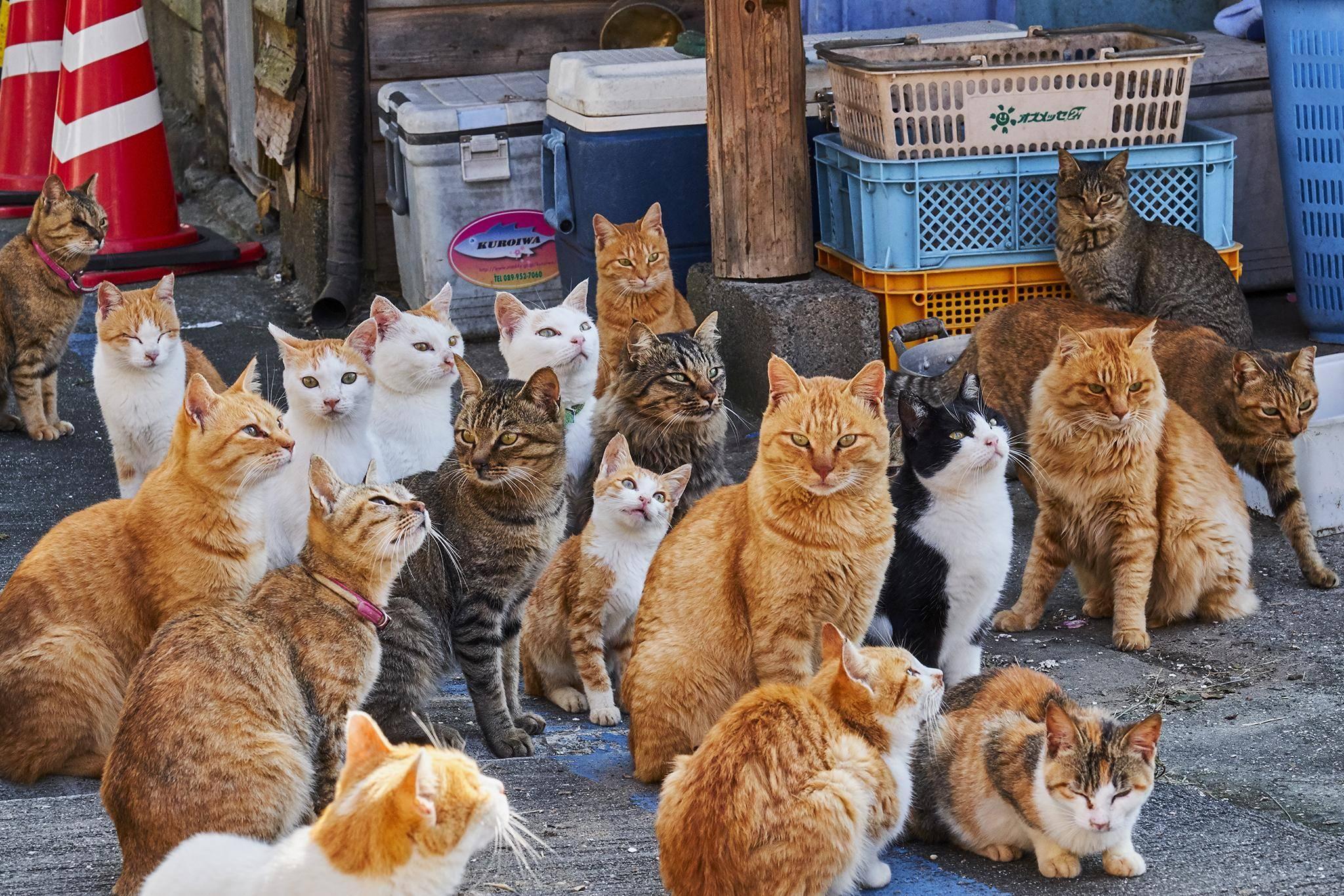 Сколько существует пород кошек в мире