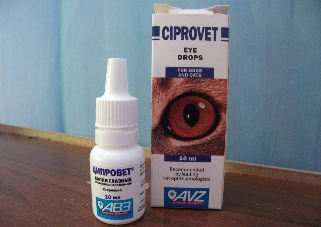Эффективные методы лечения воспалений глаза у котов самостоятельно дома